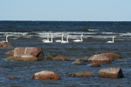 4EST – West Saaremaa – Suuriku cliff