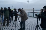 Marine bird-watching in winter