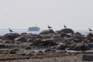 6EST – Möldri, view to a Greek ship wreck